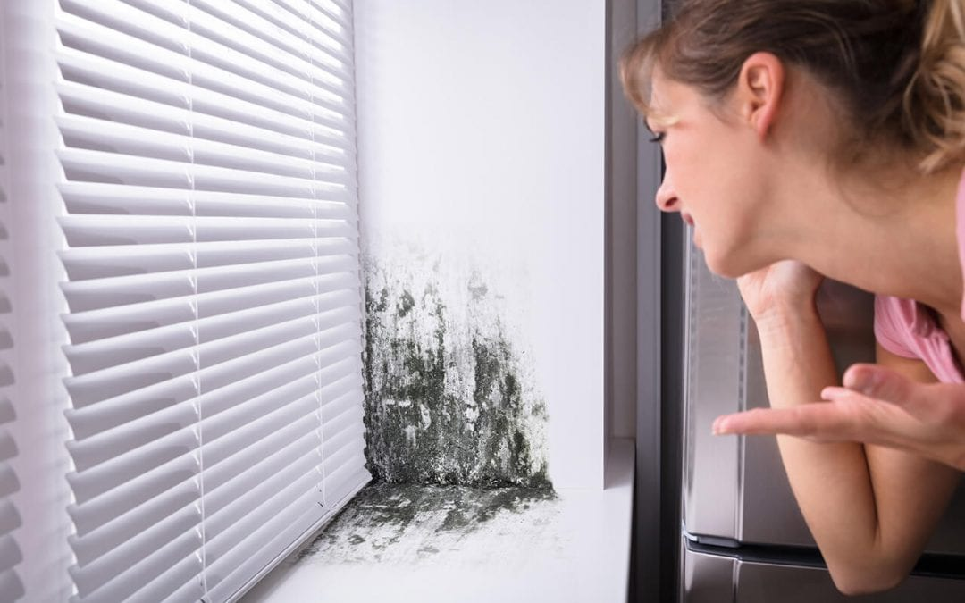 signs of indoor mold