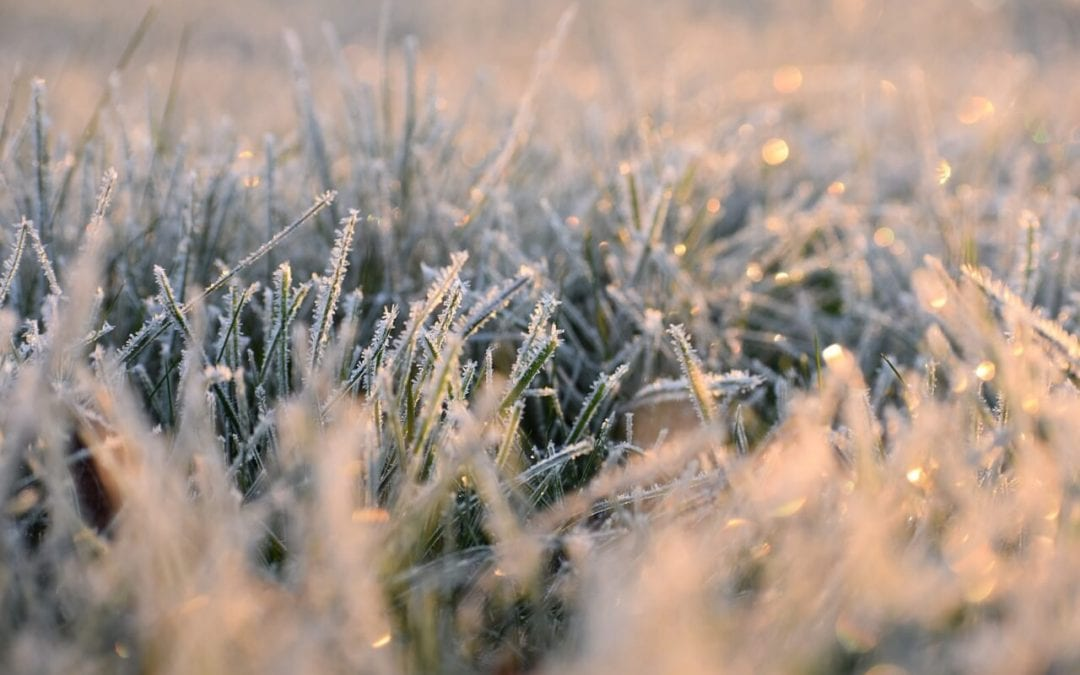 winter lawn care will help your grass be ready for spring